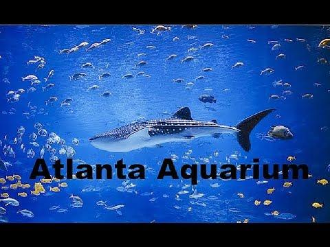 Atlanta Aquarium - WHALES?!