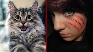 r/Nuclearrevenge My Cat Got a Cat Burglar Arrested!