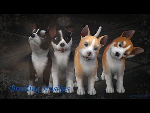 Breeding huskies ~ Sims 3 Pets
