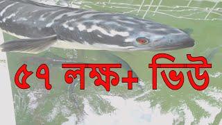 দেখুন শাহ-জালাল (র.) মাজারের বিরাট বড় ভয়ঙ্কর গজার মাছের ভিডিও। Sylhet Shah jalal (ra)'s majar.