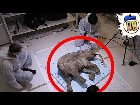 15 Extinct Animals That May Still Be Alive
