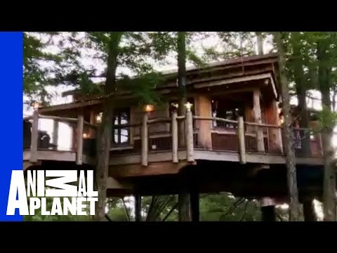 Goat Leap Treehouse | Ultimate Treehouses