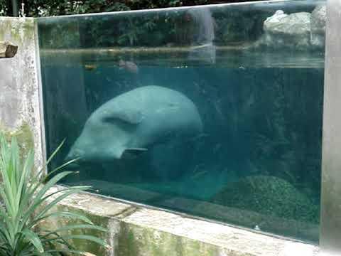 Sentosa Island-Singapore Zoo (Part 18)