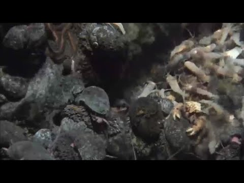 Jon Copley : Top 10 spin-offs from ocean life