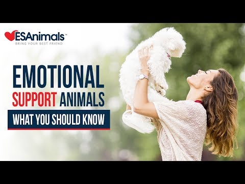 Emotional Support Animal Rights | ESAnimals.com