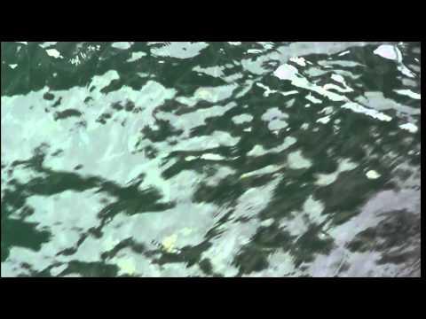 How to Use Sabiki Rig - Pier Bait Fishing setup-- Florida-- Free Unlimited bait