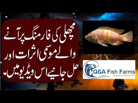 Introduction to fish Farming. Weather effects on Farm in Hindi/ Urdu with English Subtitles.