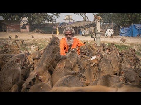 'Monkey Man' Feeds Hundreds of Primates A Day