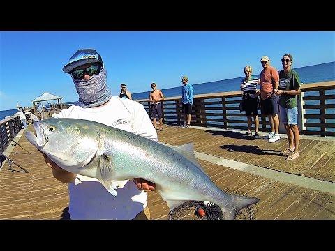 Bluefish & Mackerel INSANITY - Eating EVERYTHING (Juno Pier Spring Fishing)