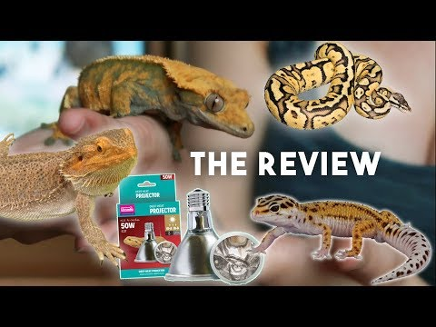 THE RESULTS - My Gecko Uses The NEW Deep Heat Projector For 2 Months!!