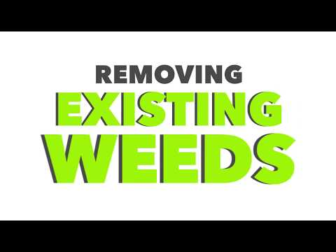 How to remove weeds from your Paving stone joints