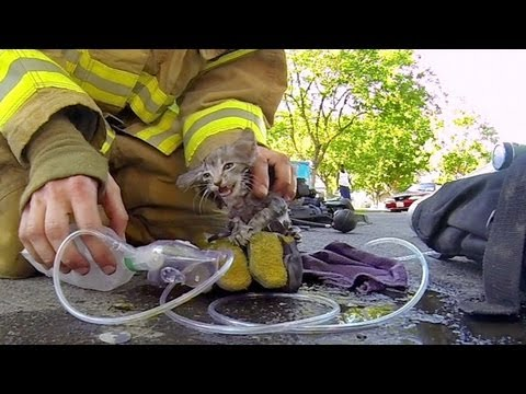 GoPro: Fireman Saves Kitten