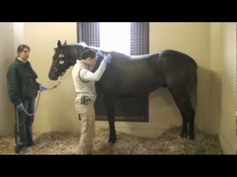 How to Take Your Horse's TPR