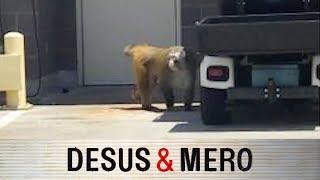 San Antonio Monkey