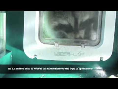 SureFlap Microchip Pet Door Raccoon Testing