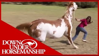 Once Bitten Twice Shy: How to Train a Dangerous, Dominant Horse