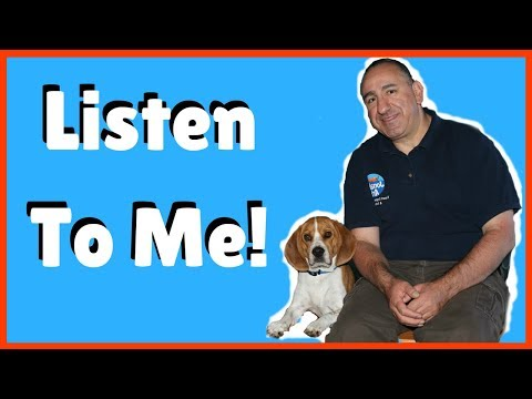 How to get my dog to listen to me all the time.
