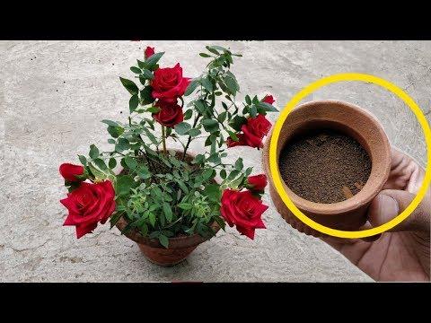 बस एक बार पौधों में डालिए फूलों की बरसात ना हो जाए तो नाम बदल देना