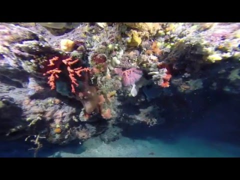 Red Coral Diving
