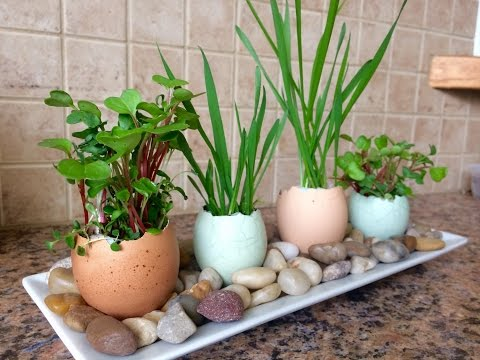 Eggshell Planters Gardening with Kids!