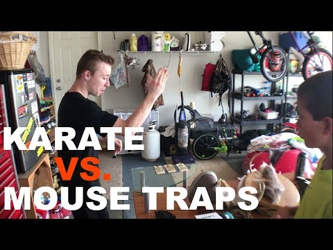 Having FUN with MOUSE TRAPS?!?