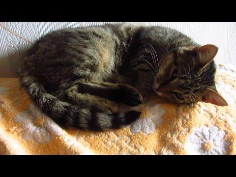 Cat 10 days after spay/sterilization