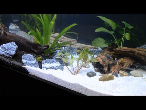 75 Gallon Planted Clear for Life Aquarium Setup Day