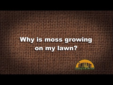 Q&A - Why is moss growing on my lawn?
