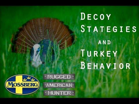 Turkey Decoy Strategies: Going Beyond Turkey Calls