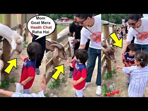Xxx Mp4 Taimur Ali Khan Feeding Goats With Mom Kareena Kapoor And Friend Kainaat Singha In Farm 3gp Sex