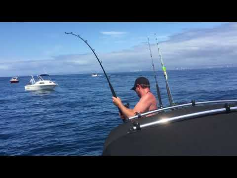 Shark fishing Gold Coast
