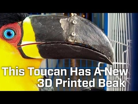 This Toucan Has A New 3D Printed Beak