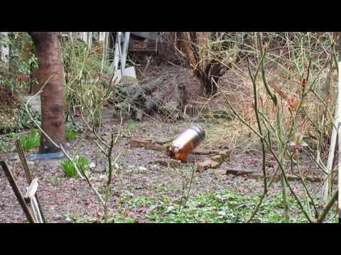 Homemade Crossbow vs Beer Keg