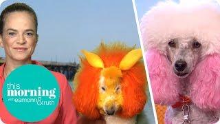 Furjazzling - Cute or Cruel? | This Morning