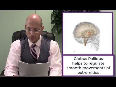 Parkinsons Disease Effective Treatment Preview