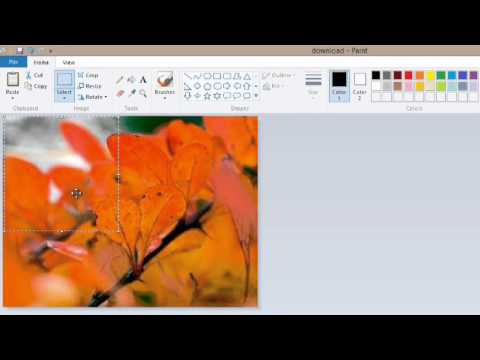 How to Make Pictures Smaller in MS Paint : Digital Imaging