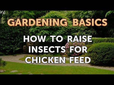 How to Raise Insects for Chicken Feed