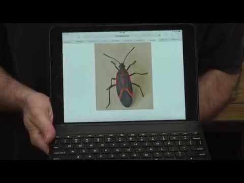 Getting Rid of Box Elder Bugs - Anderson's Seed & Garden