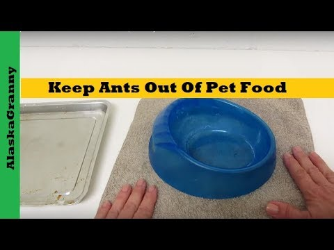 Keep Ants Out Of Pet Food 3 Simple Ways