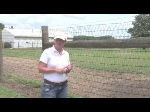 Horse Fencing: Wire Mesh Fencing