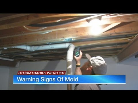 Warning signs of mold in your home