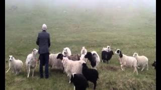 The Good Shepherd & His Sheep