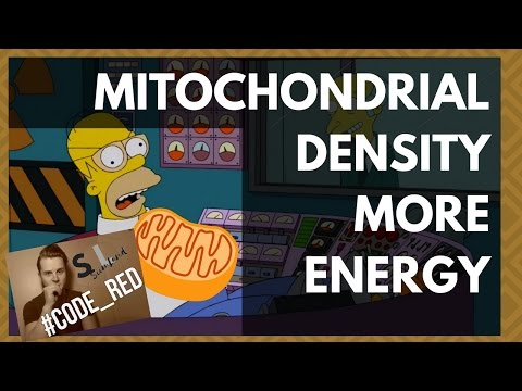 HAVE MORE ENERGY: How To Increase Mitochondrial Density ( Increase Your Energy Levels / Live Longer)