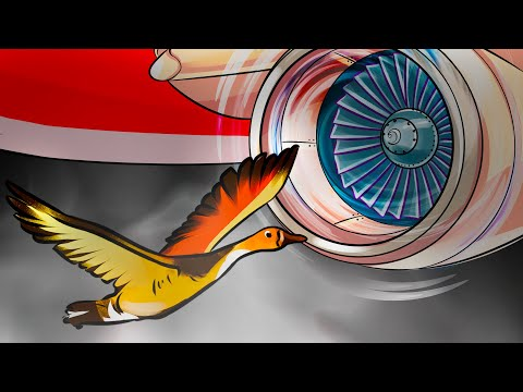 What If a Bird Flew Into a Airplane's Engine?