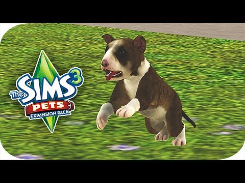Let's Play: The Sims 3 Pets - Part 2 - Adopting a Puppy!