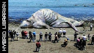 The 10 Most Mysterious Sea Monster Carcasses Ever Found
