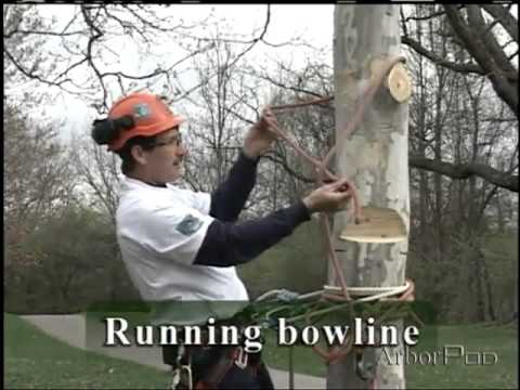 Half Hitch and Running Bowline