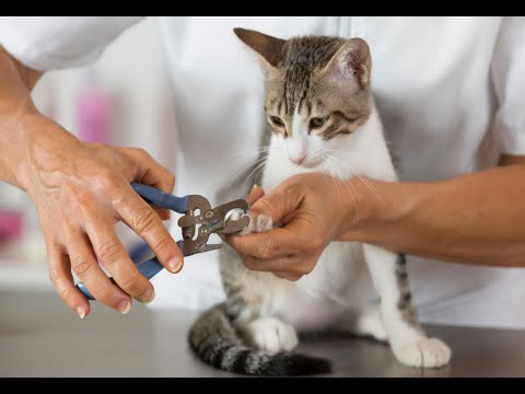 How to Groom a Cat Without Getting Scratched