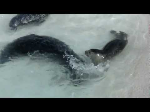 Seals at the Zoo in Iceland - Part 2 of 3