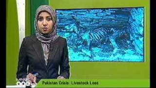 English News Help Pakistan (30 Aug 2010) mnbc-189